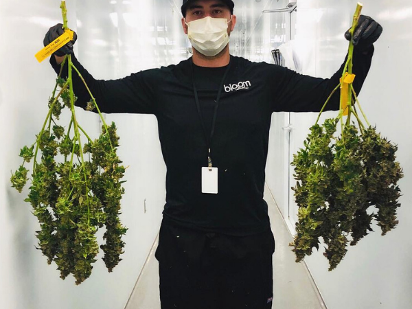 Cannabis industry - Cleanrooms - 600 x 450