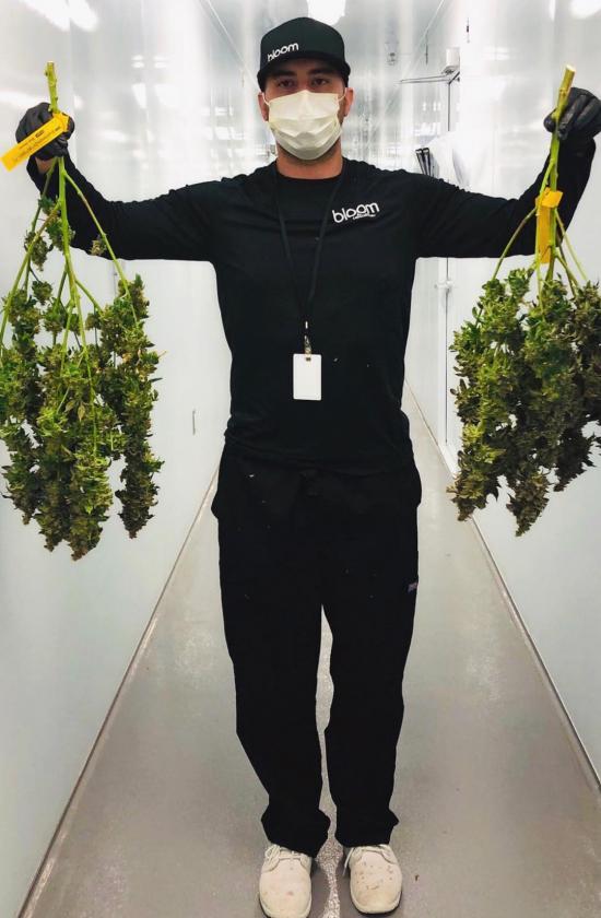 cannabis cleanroom